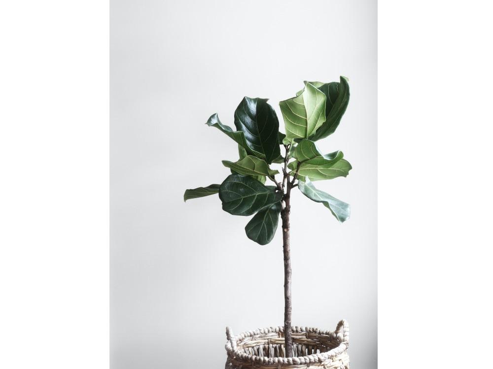 01-pianta