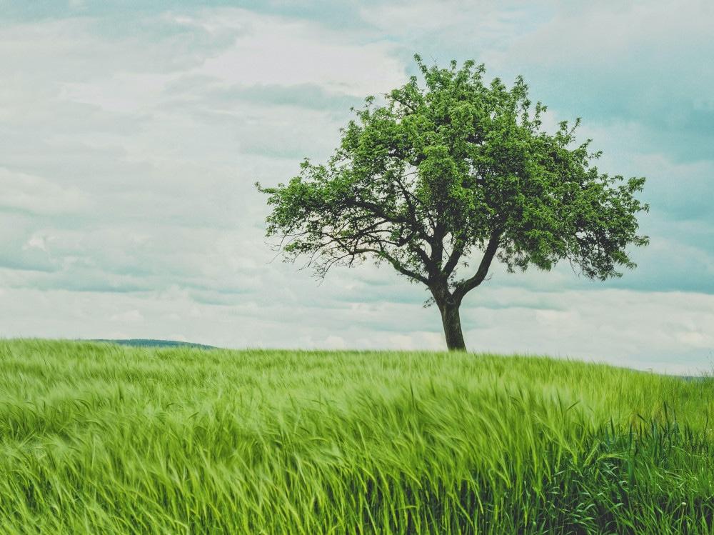 07-albero