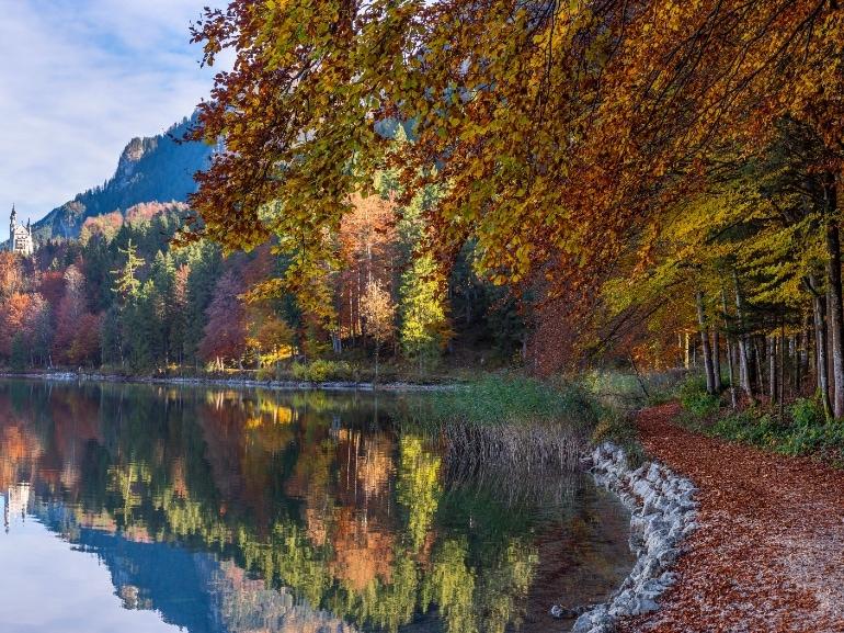 Bavarian Forest edreams
