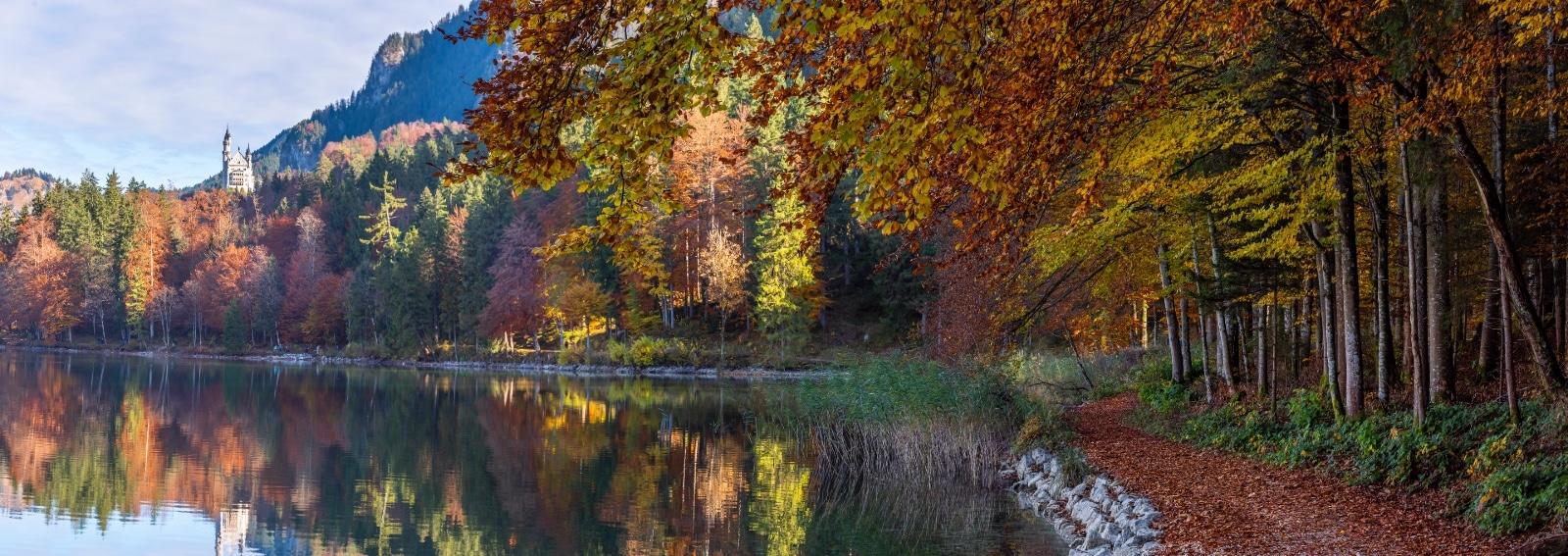 Bavarian Foresta edreams