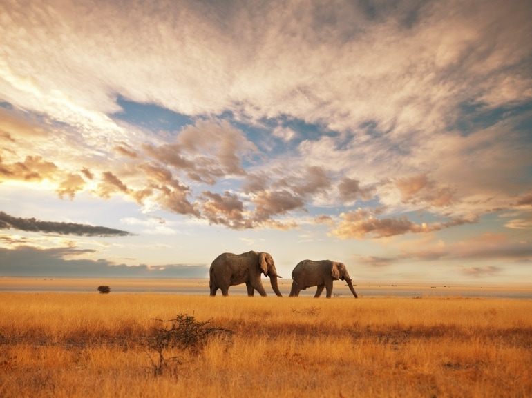Kenya edreams