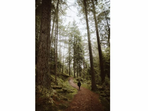 Anonymous traveler walking in forest