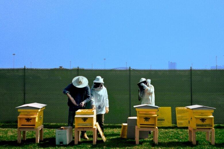 Donna Moderna inaugura a Milano il più grande apiario urbano d'Italia