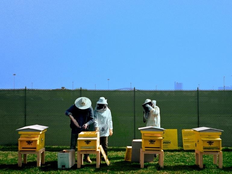 api donna moderna