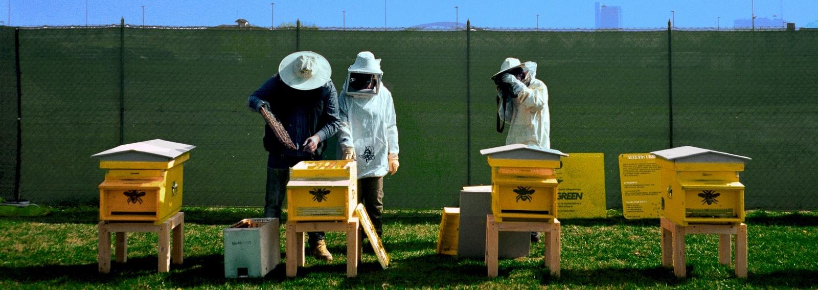 donna moderna api