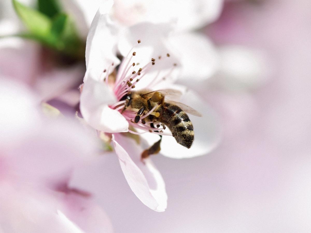 guerlain-world-bee-day-2021-01