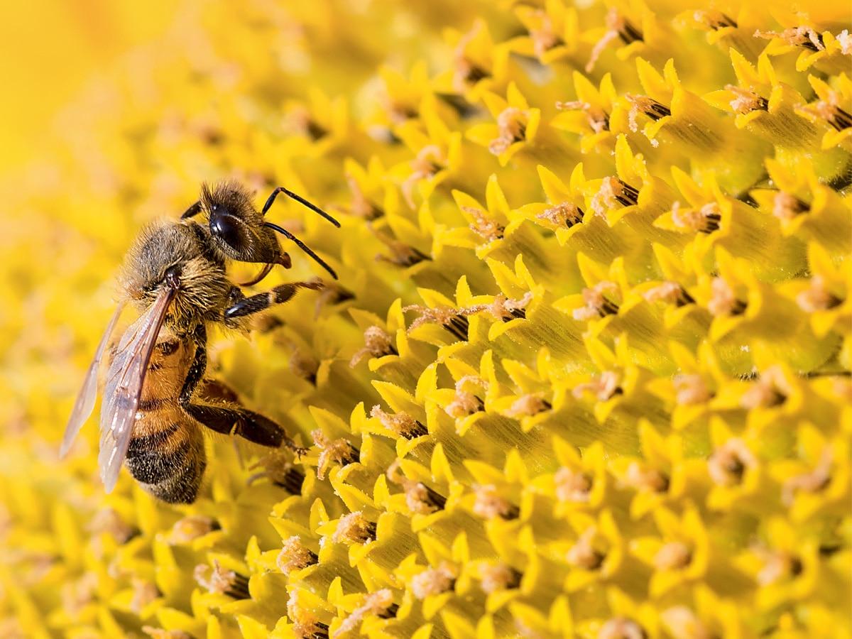 guerlain-world-bee-day-2021-05