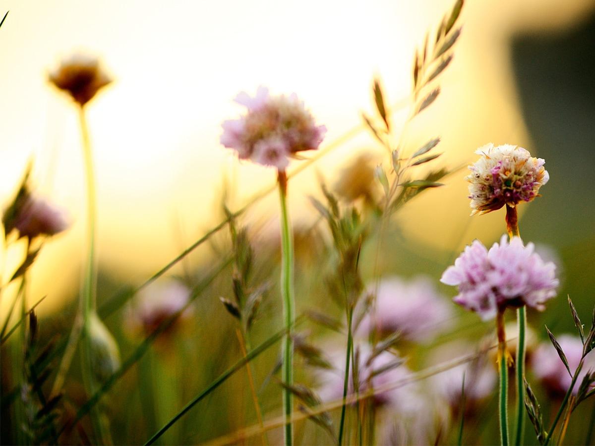 guerlain-bee-garden-2021-01