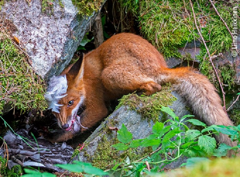 Wildlife photografer of the year
